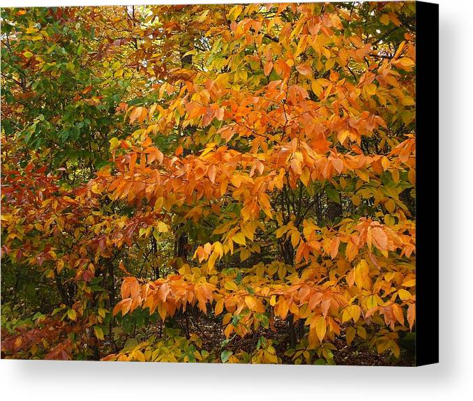 New England Canvas Print featuring the photograph Fall Mix by Gene Cyr