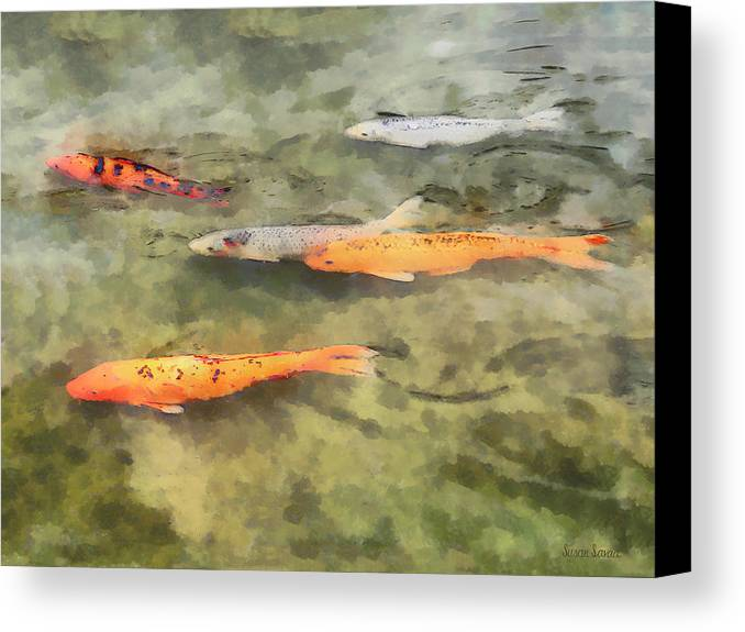 Koi Canvas Print featuring the photograph Fish - School Of Koi by Susan Savad