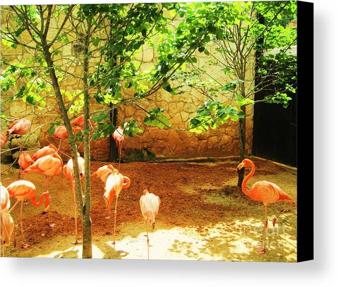 Flamingo Canvas Print featuring the photograph Flamingo 1 by Esther Rowden