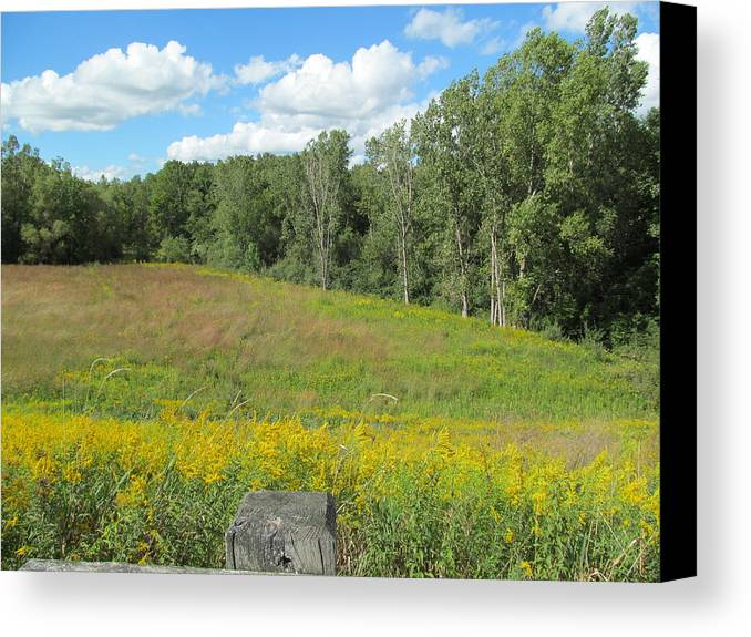 Meadows Canvas Print featuring the photograph Flowers And Grass by Tina M Wenger