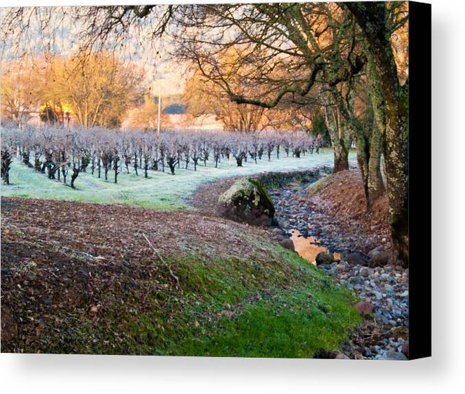 Creek Canvas Print featuring the photograph Frost In The Valley by Bill Gallagher