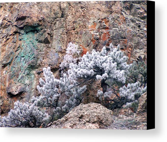 Cooper Rock Tree Frost Boulder Colorado Rock Mountains Winter Colorful Rocks Canvas Print featuring the photograph Frosted Trees by George Tuffy