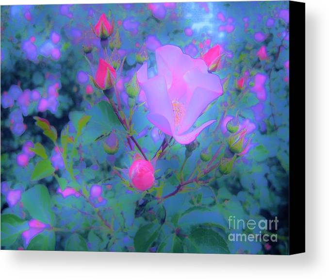 Rose Canvas Print featuring the photograph Gypsy Rose - Flora - Garden by Susan Carella