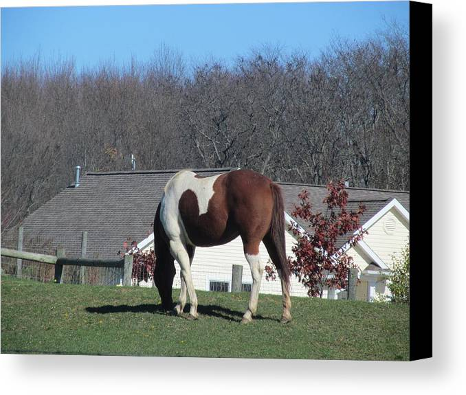 Horse Canvas Print featuring the photograph Horse And Shadow by Tina M Wenger