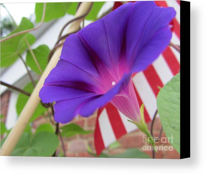 Flower Canvas Print featuring the photograph In The Morning - Summertime by Susan Carella
