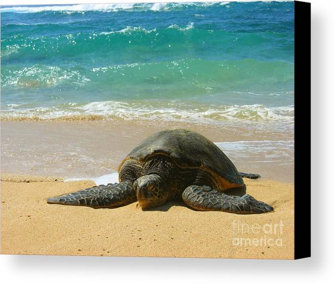 Sealife Canvas Print featuring the photograph Just Resting by Christine Stack