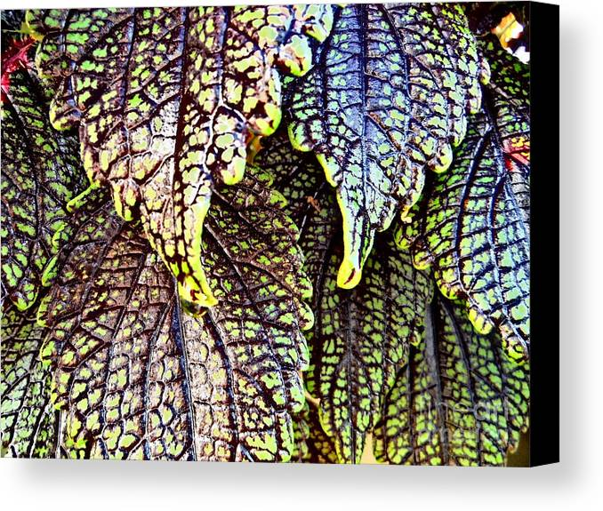 Leaf Series 15 Canvas Print featuring the photograph Leaf Series 15 by Paddy Shaffer