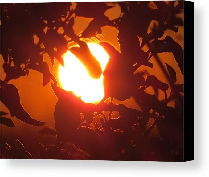 Sun Canvas Print featuring the photograph Light Bulb by Nikki Watson  McInnes