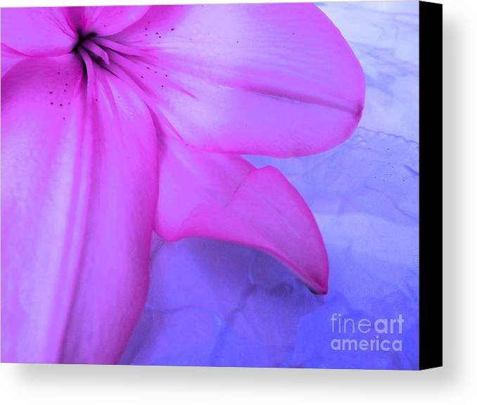 Lily Canvas Print featuring the photograph Lily - Digital Art by Robyn King