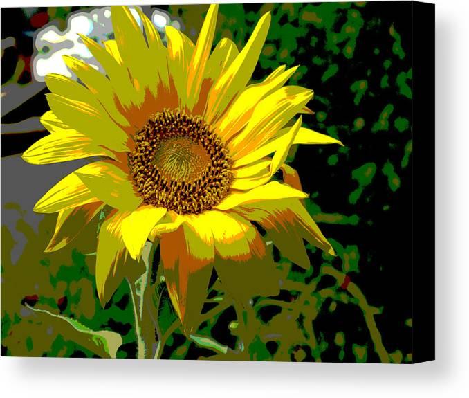 Sunflower Canvas Print featuring the digital art Lone Sunflower by Barbara McDevitt