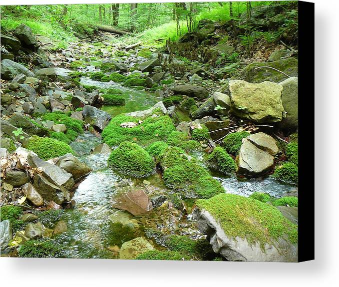 Pocono Canvas Print featuring the photograph Meandering Stream by Two Bridges North