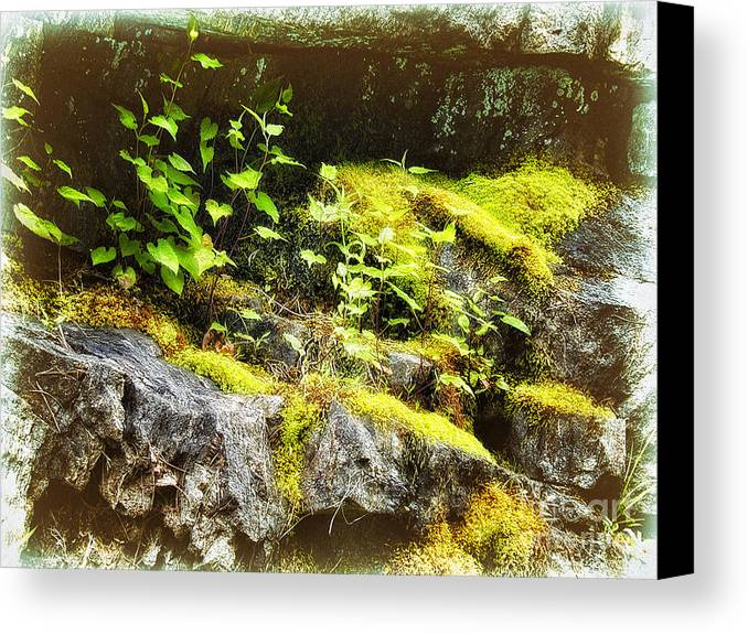 Blue Ridge Mountains Canvas Print featuring the painting Moss Rocks by Dan Carmichael