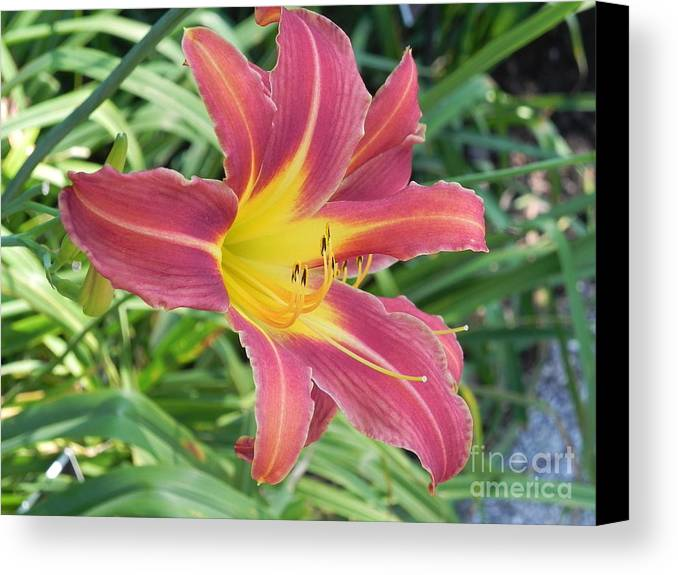 Photography Canvas Print featuring the photograph Natures Way Of Blending Color by Chrisann Ellis