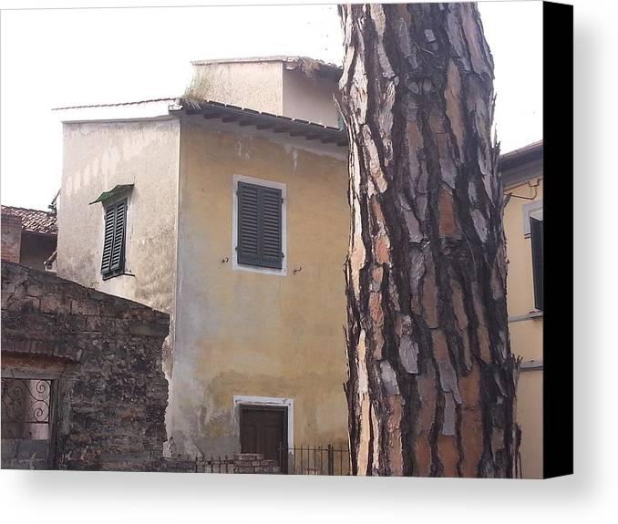 Poggio A Caiano Canvas Print featuring the photograph Nice Bark by Brian McCullough