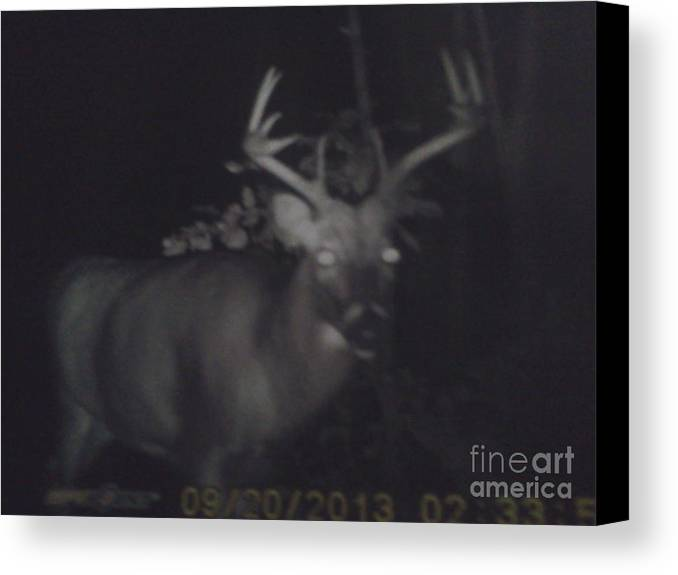 Pencil Canvas Print featuring the photograph Night Buck by Troy Chevalier