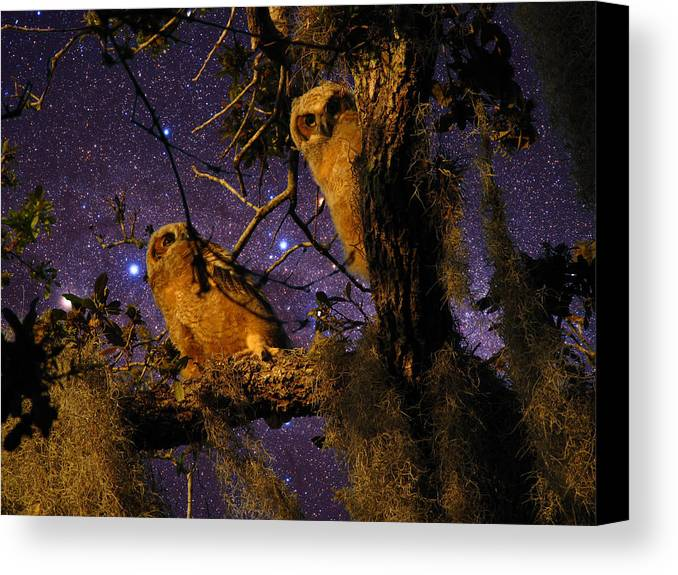 Phil Canvas Print featuring the photograph Night Owls by Phil Penne