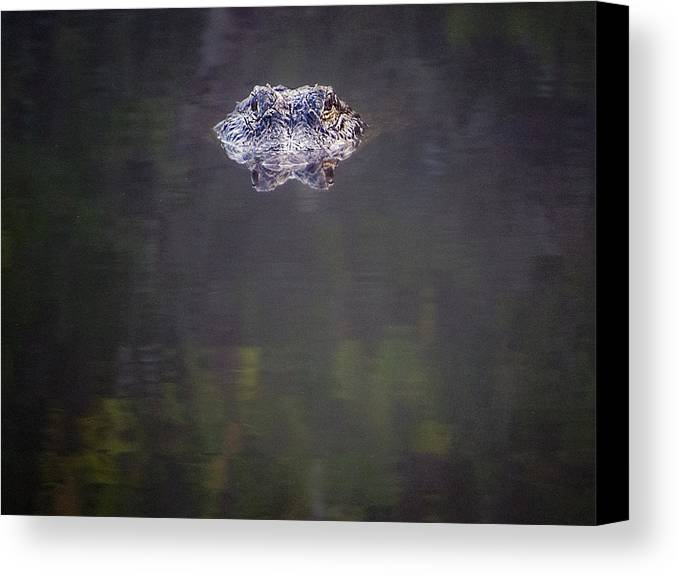 Alligator Canvas Print featuring the photograph Crocodile Eyes by Patti Deters