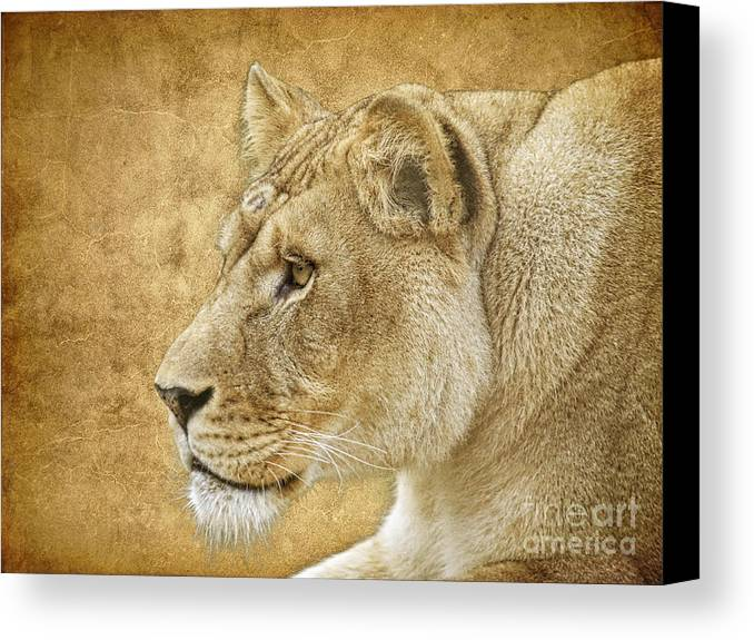 Lion Canvas Print featuring the photograph On Target by Steve McKinzie