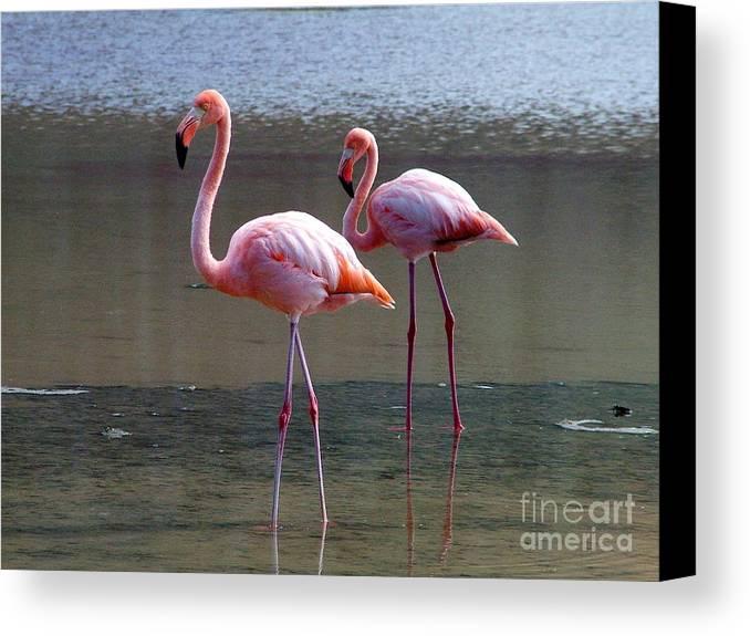 Ecuador Canvas Print featuring the photograph Pinkest Flamingo by Fabian Romero Davila