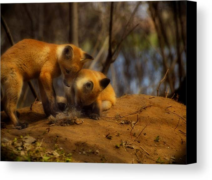 Kit Foxes Canvas Print featuring the photograph Play Time by Thomas Young
