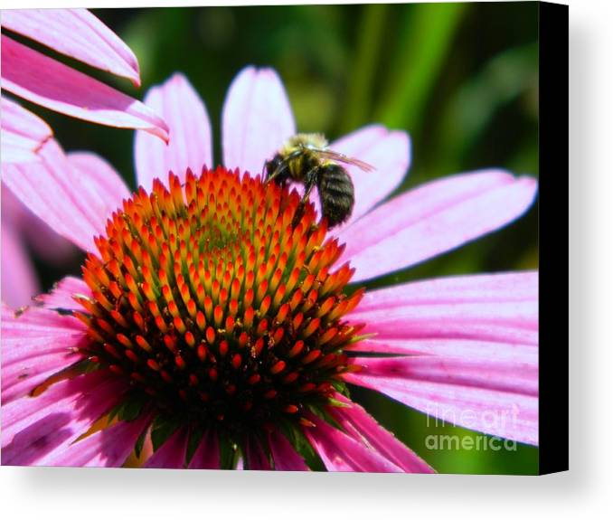 Pollinator Canvas Print featuring the photograph Pollinator by K L Roberts