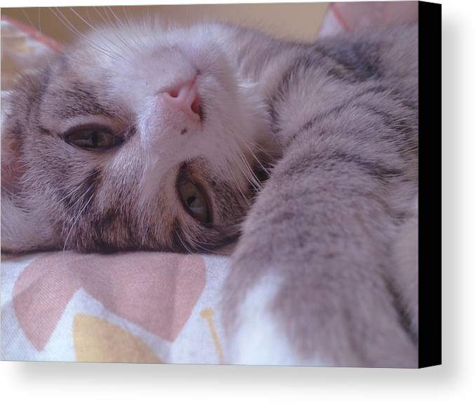 Kitten Canvas Print featuring the photograph Relax by Lucy D