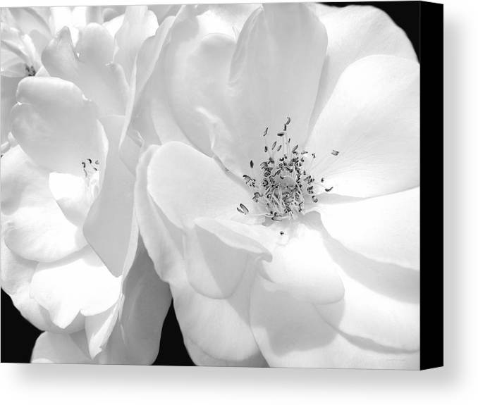 Rose Canvas Print featuring the photograph Roses Soft Petals In Black And White by Jennie Marie Schell