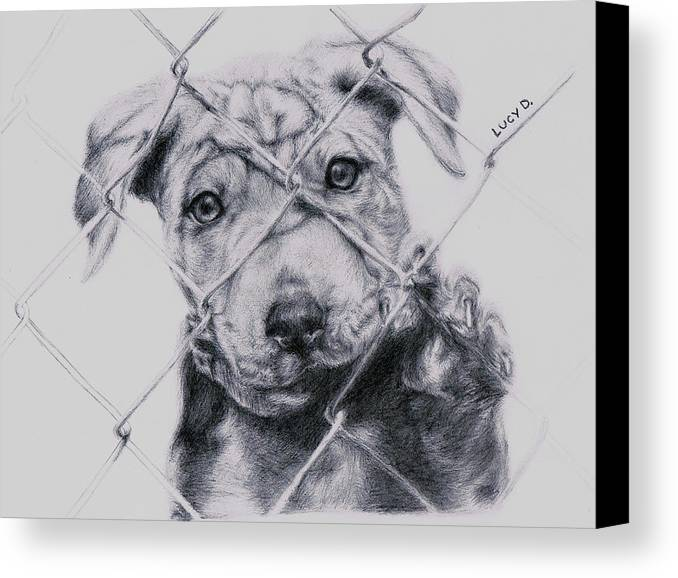 Animals Canvas Print featuring the drawing Save Me by Lucy D