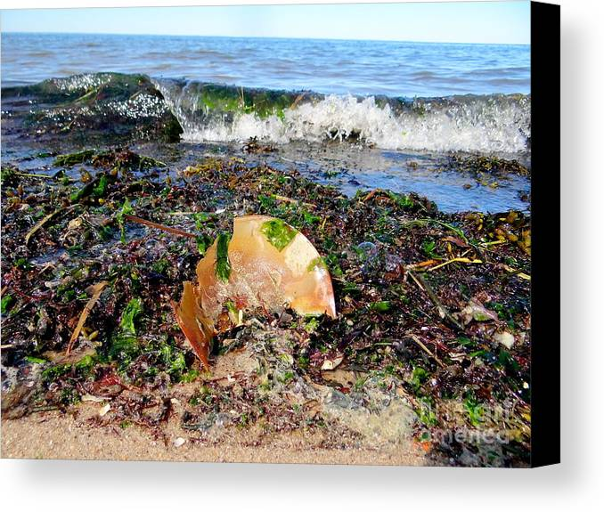 Nature Canvas Print featuring the photograph Shore Scene by Ed Weidman