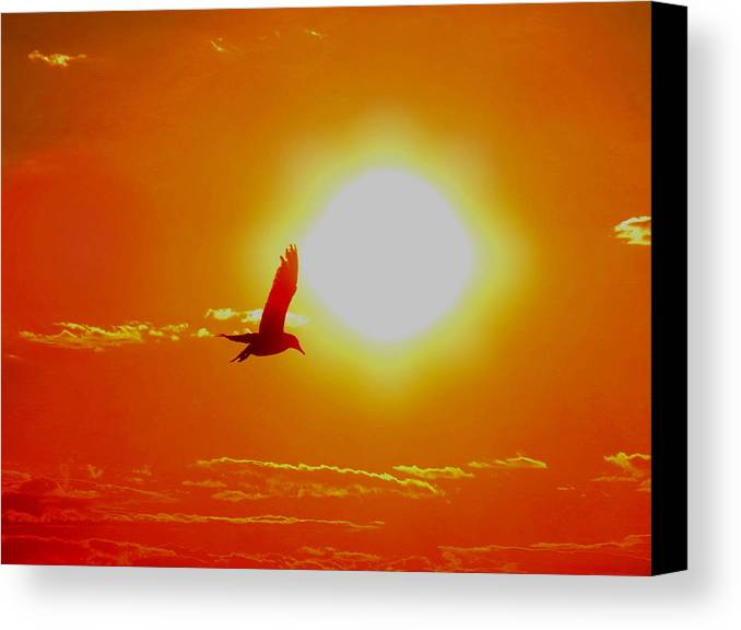 Sun Canvas Print featuring the photograph Silhouetted Seagull by Stephen Melcher