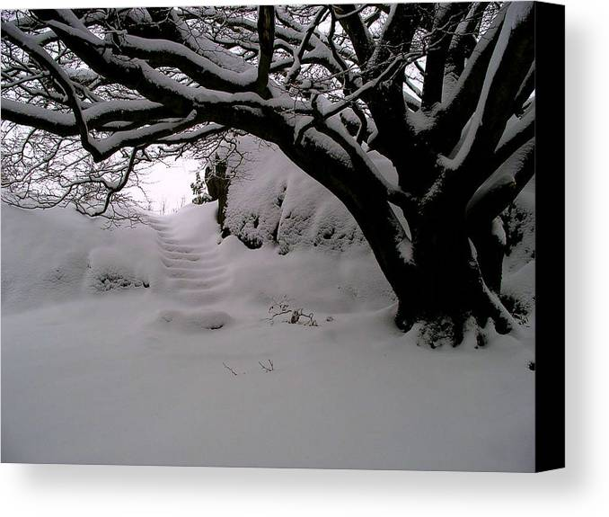 Snow Canvas Print featuring the photograph Snowy Path by Amanda Moore