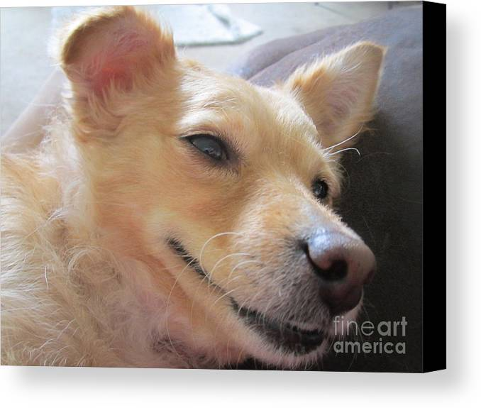 Dog Canvas Print featuring the digital art So Sleepy by Bob Semk
