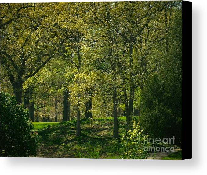 Golf Course Canvas Print featuring the photograph Soft Spring Light by William OBrien