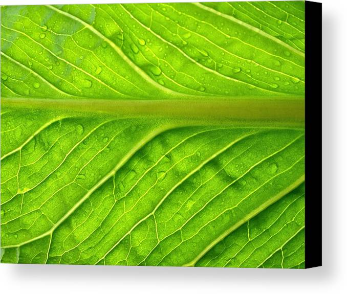 Forest Canvas Print featuring the photograph Splash Of Green by Tom Druin