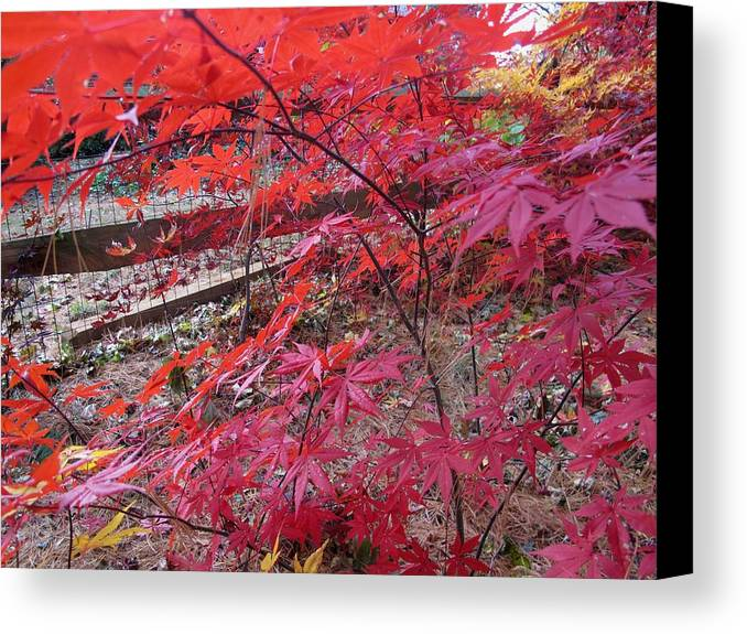 Nature Canvas Print featuring the photograph Splendid Fall by Valia Bradshaw