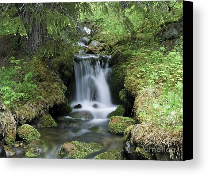 Beautiful Canvas Print featuring the photograph Stream by IB Photography