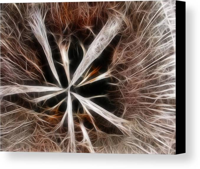 Abstract Canvas Print featuring the photograph Stumped by Shane Bechler