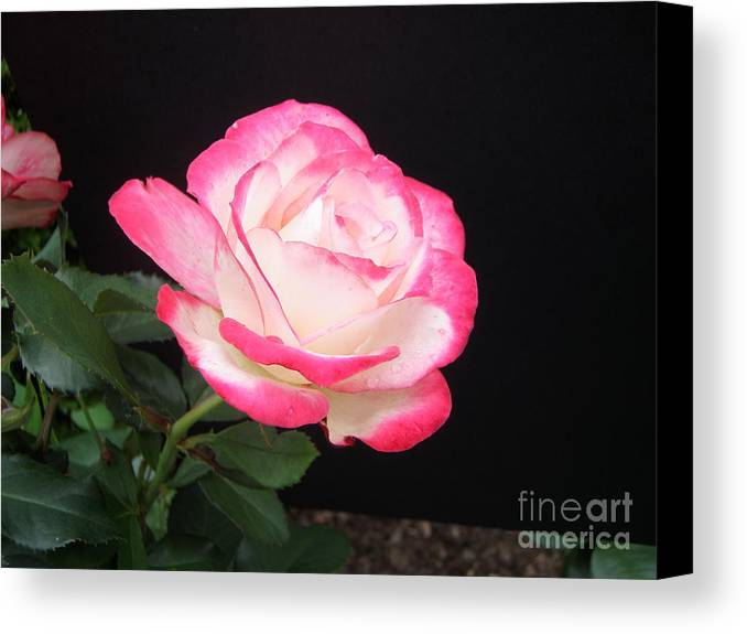 Canvas Print featuring the photograph Summer Breeze by Nona Kumah