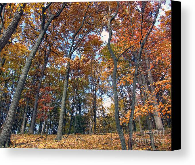 Landscape Canvas Print featuring the photograph Sunny Autumn Day 3 by Cedric Hampton