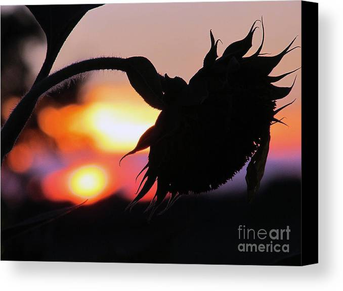 Suns Canvas Print featuring the photograph Sunset 365 19 by Tina M Wenger