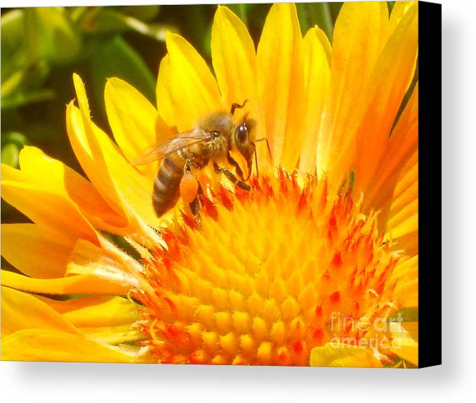 Flower Canvas Print featuring the photograph Sweet Bee by Laarni Montano