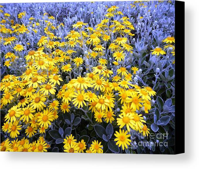 Flowers Canvas Print featuring the photograph The Field Of Wonder by Loreta Mickiene
