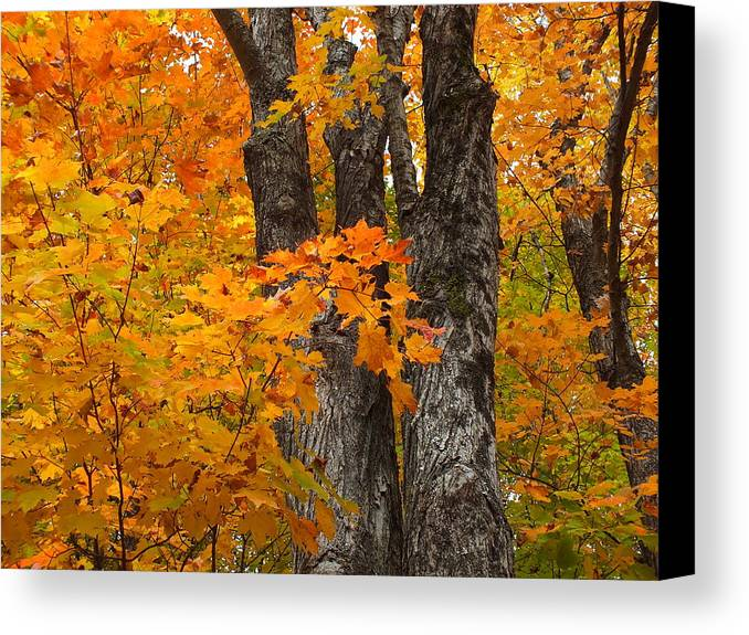 New England Canvas Print featuring the photograph Trunks In Orange by Gene Cyr