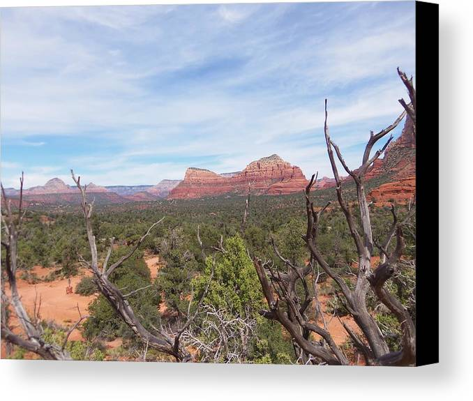 Arizona Canvas Print featuring the photograph Twisted Tree View by Two Bridges North