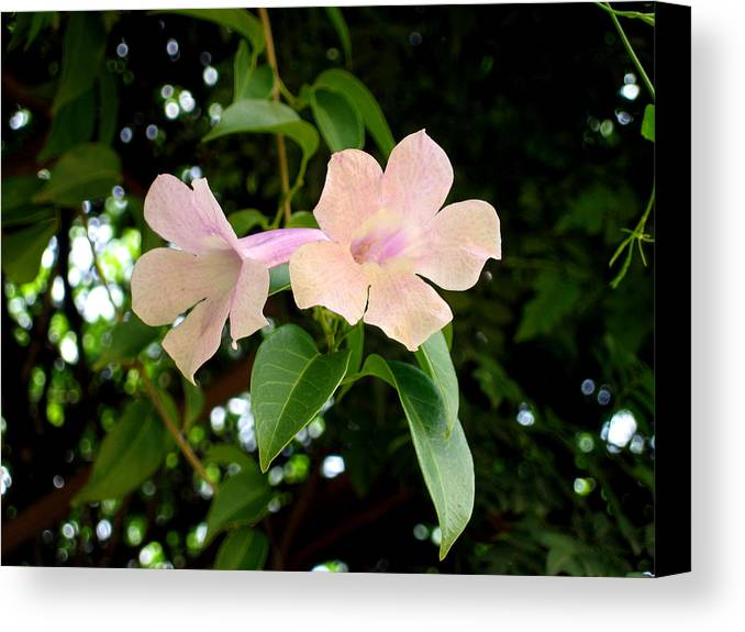 Flowers Canvas Print featuring the photograph Twosome Bloom by Bliss Of Art