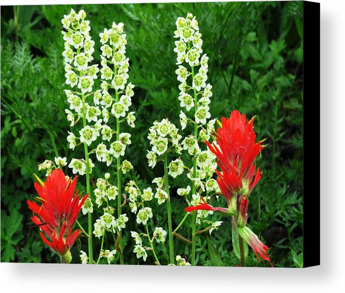 Wildflowers Canvas Print featuring the photograph Uncommon Friends by Laurie Lambe