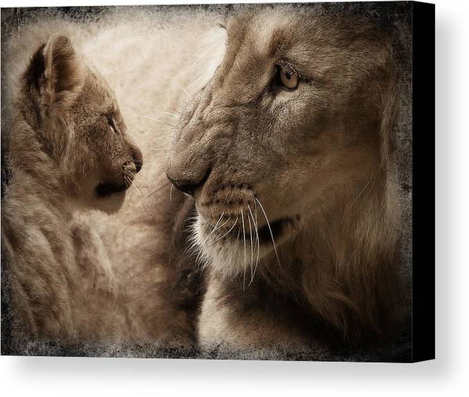 Lion Canvas Print featuring the photograph Understood?? by Christine Sponchia