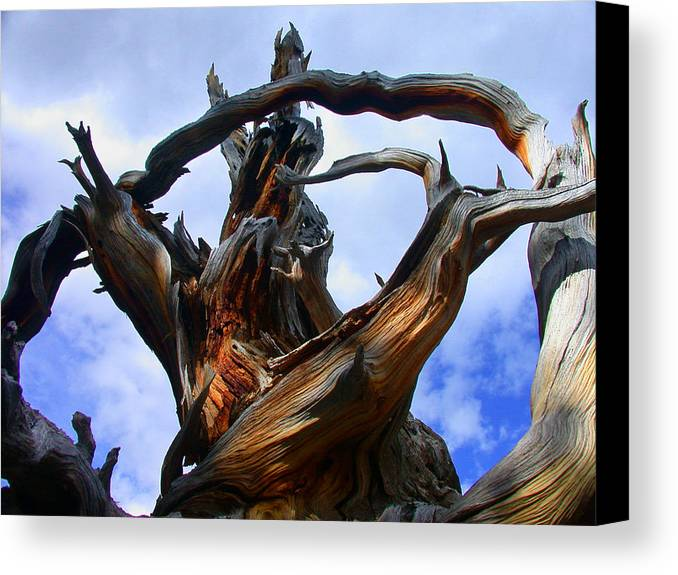 Tree Roots Canvas Print featuring the photograph Uprooted Beauty by Shane Bechler
