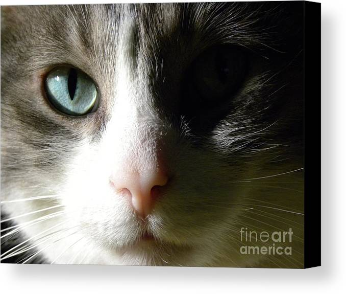Eyes Canvas Print featuring the photograph When I Look In Your Eyes.... by Laura Yamada