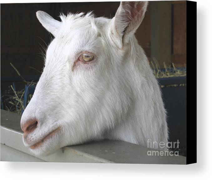 Goat Canvas Print featuring the relief White Goat by Ann Horn